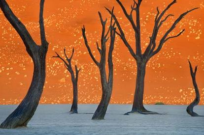 Frans Lanting photo featured in National Geographic where his photograph looks like a painting